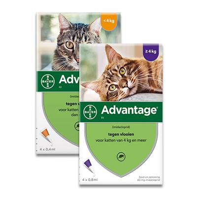 Advantage kat | Petcure.nl