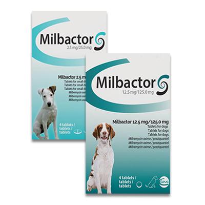 Milbactor Hund
