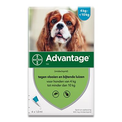 Advantage 100 (Hond 4 - 10 kg) - 4 Pipetten | Petcure.nl