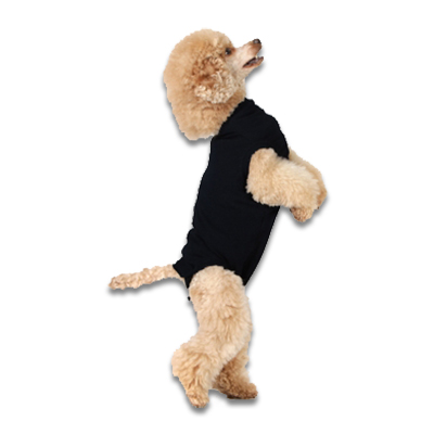 Recovery Suit Hond - Xs - Zwart | Petcure.nl